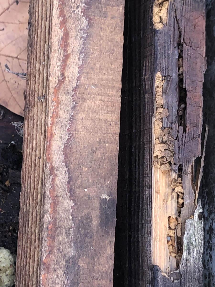 Renov Toiture Lorraine traitement-charptente1 Traitement de charpente